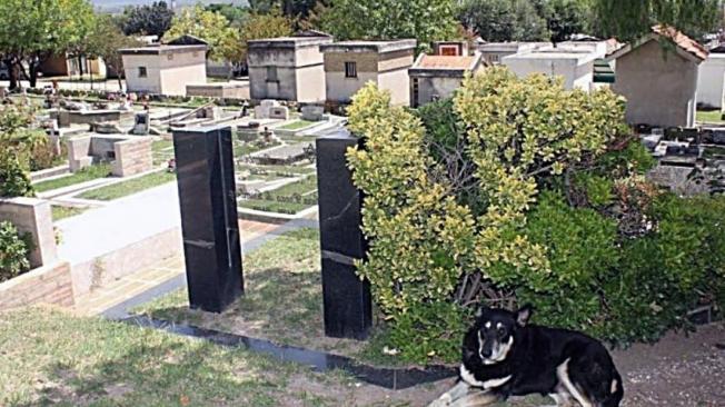 O vira-lata Capitão descansa ao lado do jazigo do dono, que morreu em 2006 em Córdoba