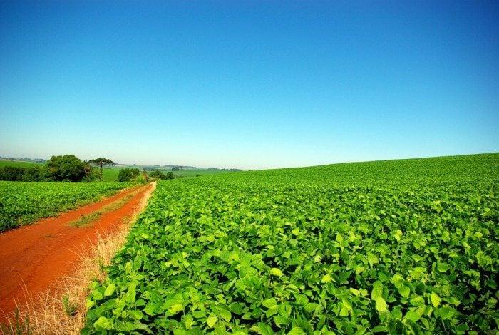 A safra brasileira de soja também deve aumentar sua produtividade em 4,3% em relação à safra anterior.