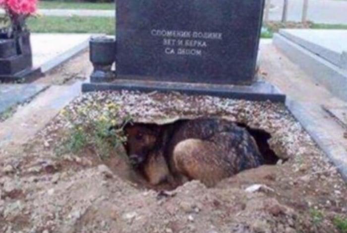 O cachorrinho no túmulo do seu dono