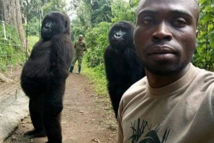 Gorilas posam ao lado de guarda florestal em parque nacional no Congo
