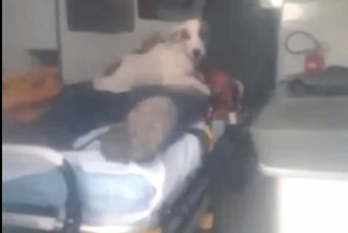 Cachorro pega 'carona' em ambulância para acompanhar dono atropelado