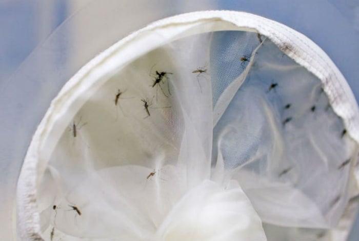 Transmitido pelo mosquito Haemagogus, o mayaro ainda está restrito a áreas de mata no Sudeste