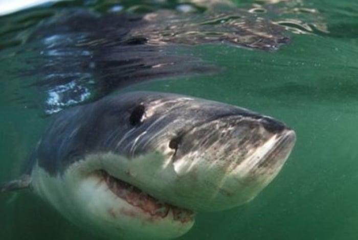 Assustador! Tubarão branco de seis metros escolta família durante passeio de barco; vídeo