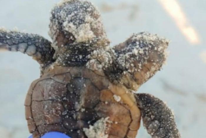 Tartaruga de duas cabeças é encontrada em praia dos EUA