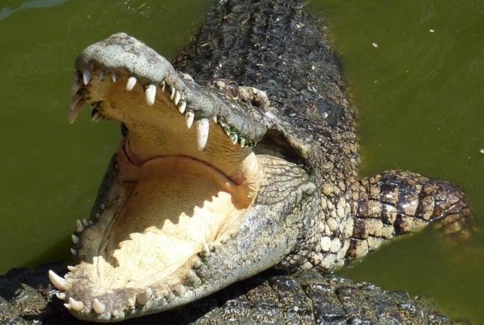 Crocodilo na Austrália
