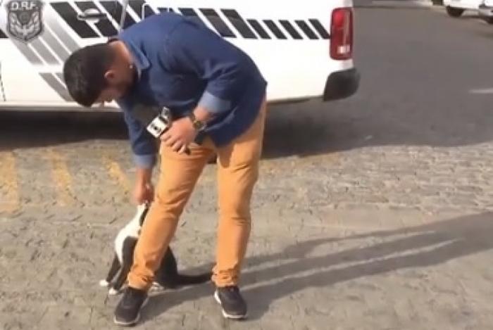 Repóter da Globo e gatinho