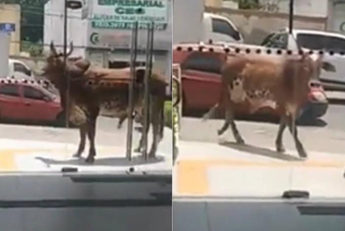 Clientes ficaram nervosos ao ver o animal avançar na porta