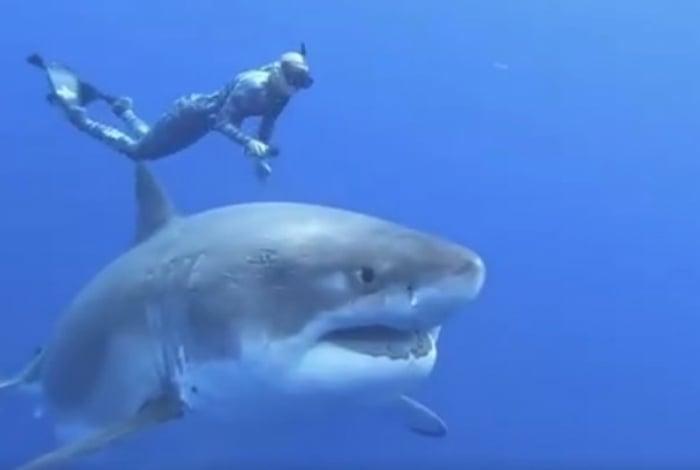 Apesar da proximidade da mergulhadora, tubarão foi pacífico e não ofereceu ameaçar