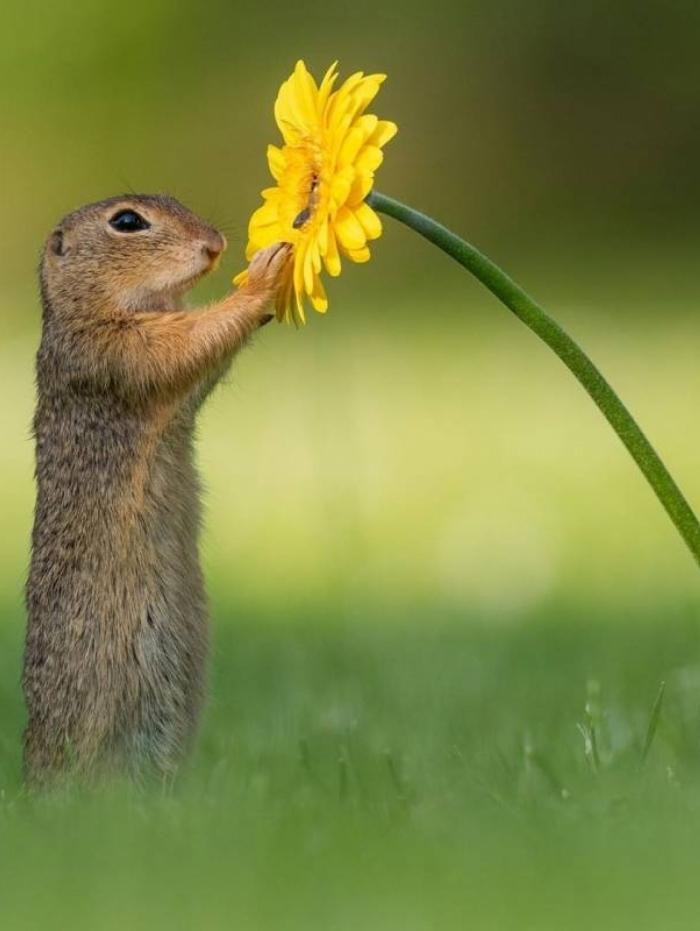 O fotógrafo holandês flagou o momento do esquilo com a flor amarela