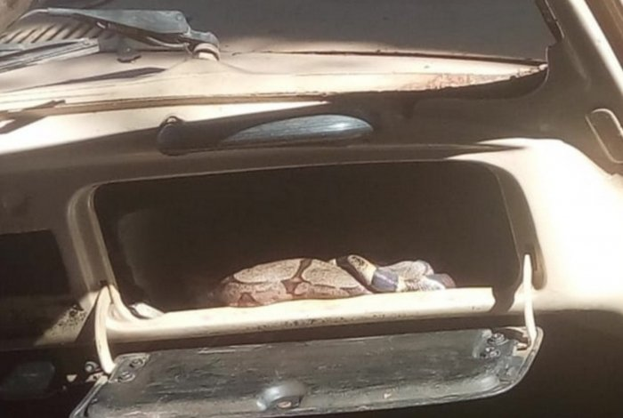 Vizinhos se assustaram ao ver cobra em porta-luvas de fusca abandonado, em Goiás