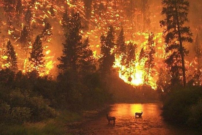 Grandes incêndios atingem a Austrália e país entra em estado de alerta