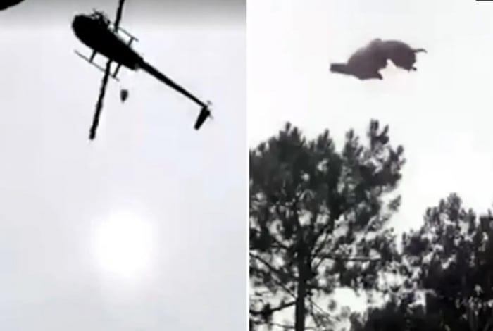 Animal é jogado de helicóptero