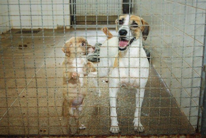 Medidas para casos de maus-tratos a animais são aprovadas na Alerj