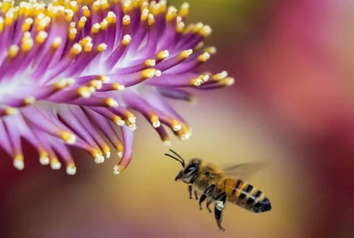 Homem encontra 100 mil abelhas vivendo em casa nos EUA
