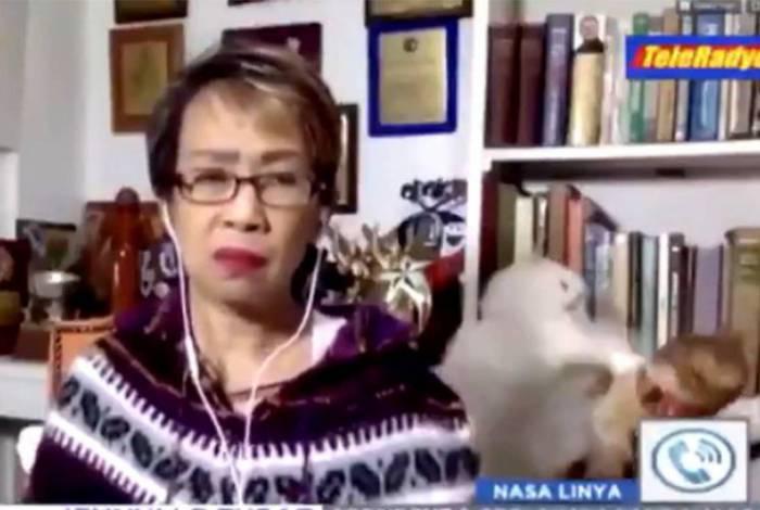 Gatos roubam a cena durante ao vivo de jornalista