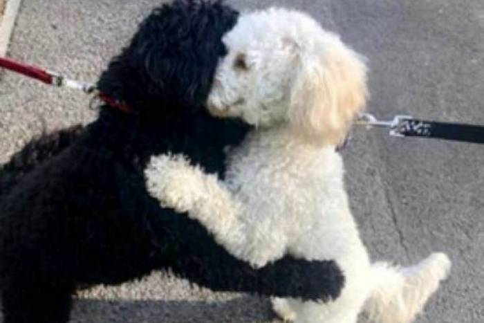 Cães irmãos se reencontram e têm reação fofa