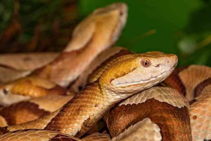 Por duas vezes cobras venenosas foram usadas na tentativa de o crime dar certo