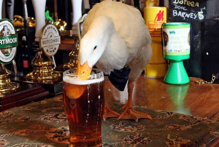 Pato fica bêbado, arruma confusão com cachorro e se dá mal