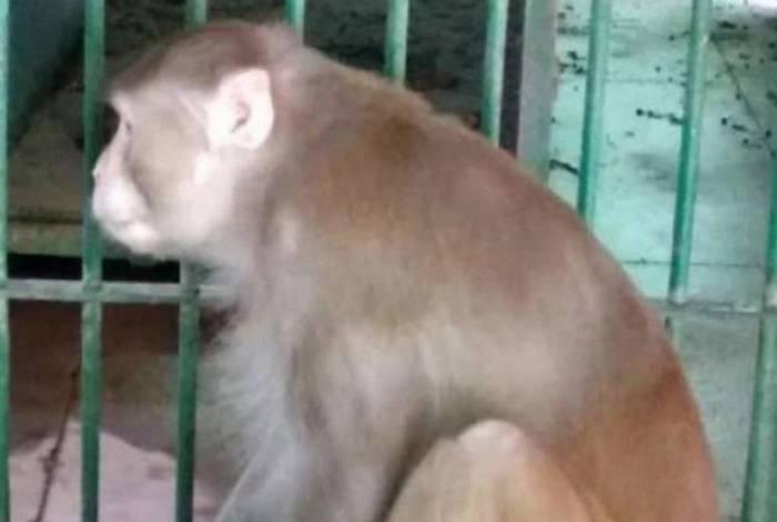 Macaco alcoólatra mata uma pessoa e fere outras 250 após ficar sem bebida