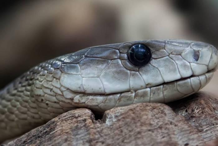Homem encontra cobra venenosa em casa e animal tem 35 filhotes