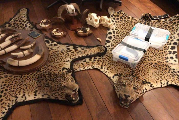 Polícia deflagrou operação contra tráfico de animais exóticos