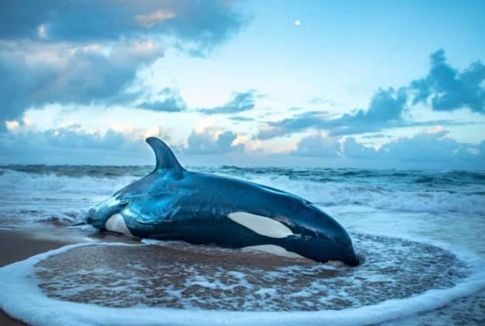 Imagens mostram animal tentando, em vão, retornar ao oceano após encalhar na areia
