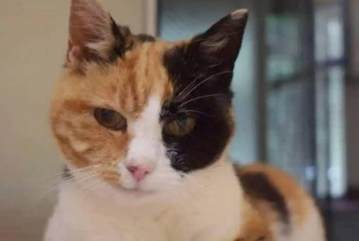 Gato é encontrado após 12 anos