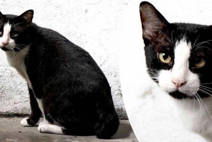 Gato faz sucesso na internet por mancha no rosto em formato de órgão sexual masculino