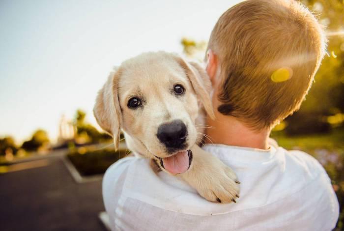 Entenda o que representa sonhar com cachorro
