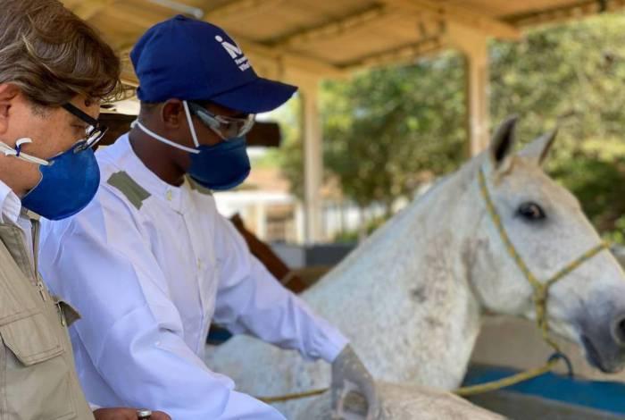 Projeto está desenvolvendo um produto à base de soros de cavalos para o tratamento do coronavírus