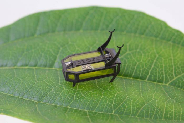 This July 2018 handout photo obtained August 18, 2020 courtesy of Xiufeng Yang, University of Southern California shows a robotic beetle. - Scientists have long envisioned building tiny robots capable of navigating environments too dangerous for humans -- but finding ways to keep them powered and moving has been impossible to achieve. A team at the University of Southern California has now found a breakthrough, building an 88-milligram