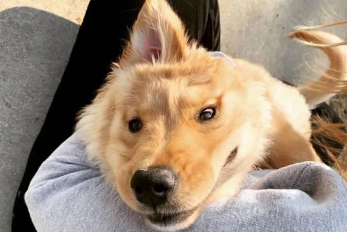 Conheça o cachorro unicórnio que nasceu apenas com uma orelha no meio da cabeça
