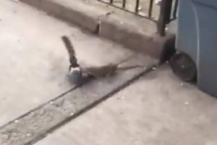 Rato e pomba brigam em Nova York