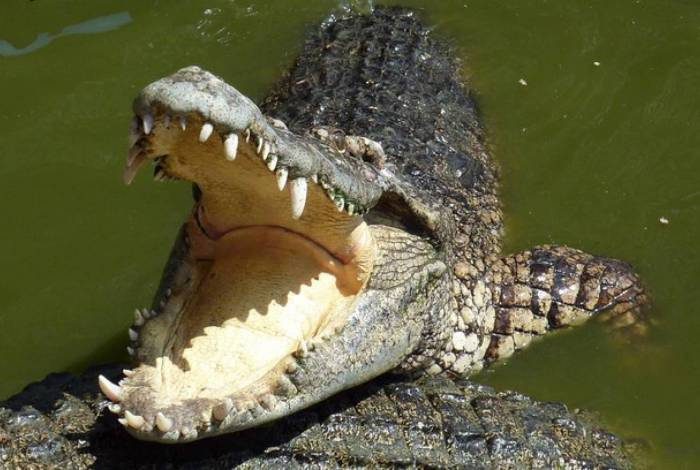 Animal nadou ao lado do barco por alguns instantes