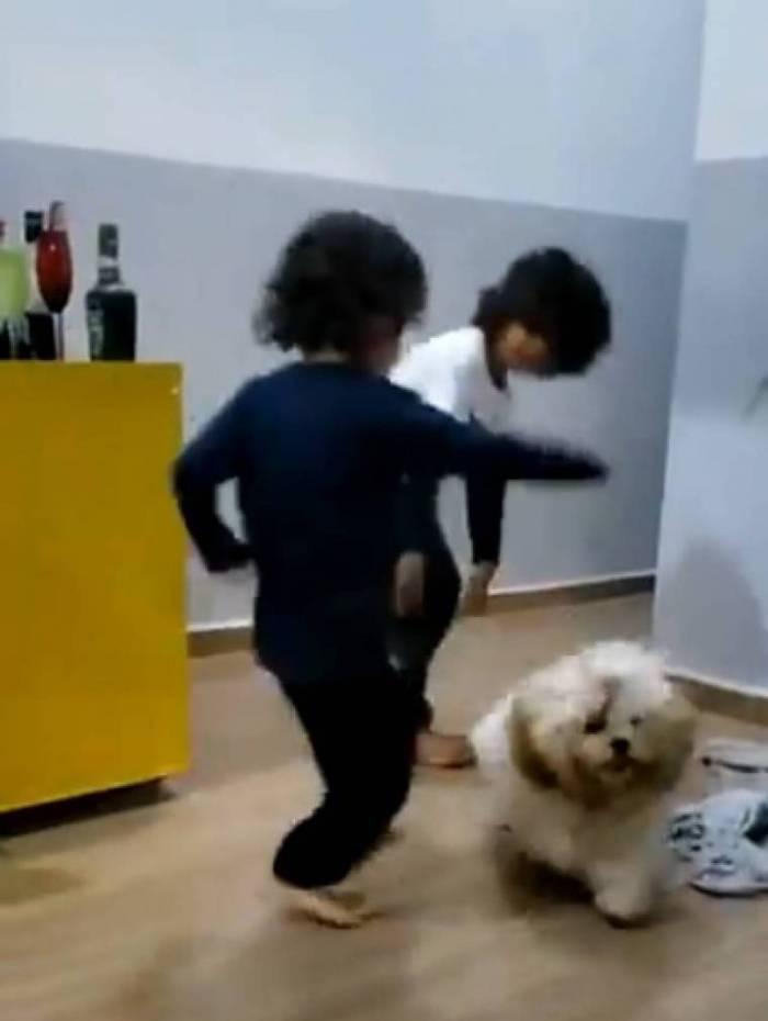 Cachorro Fubá
