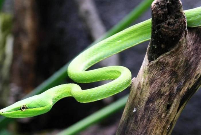 Imagem ilustrativa. A espécie da cobra não foi informada.