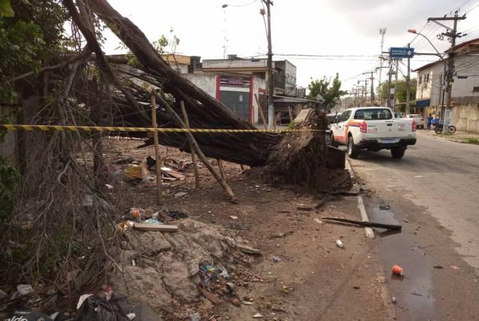 Prefeitura foi acionada 57 vezes para quedas de árvores