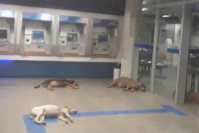 Cães invadem banco com ar-condicionado para escapar de calor de 40ºC