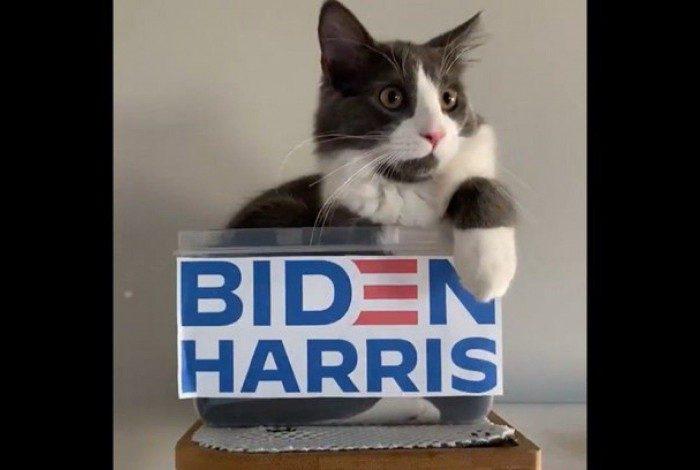 Gatinhos convidam internautas para votar em Biden