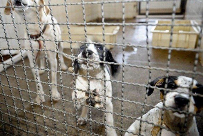 Especialista explica que muitas das aquisições, recolhimento e adoções de cães e gatos ocorrem por impulso, comoção ou até mesmo modismo