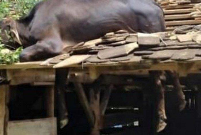Animal sofreu apenas algumas escoriações na pata