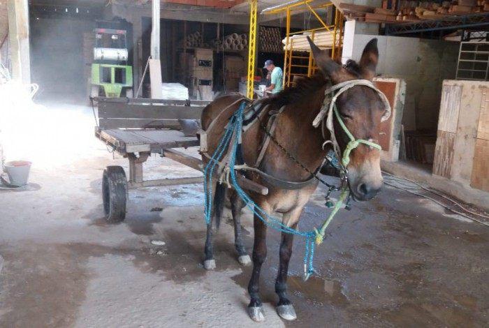 Polícia resgata mula que era usada para transportar material de construção na Baixada Fluminense
