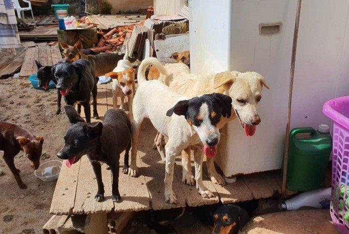 Grupo de proteção aos animais busca novos lares para cães que ficaram sem a dona