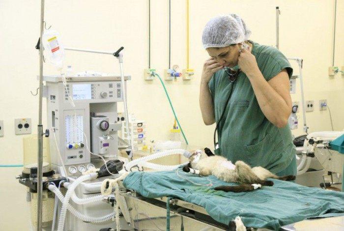 A convocação é exclusiva para médicos veterinários na ativa, com menos de 60 anos, sem comorbidades ou doenças autoimunes