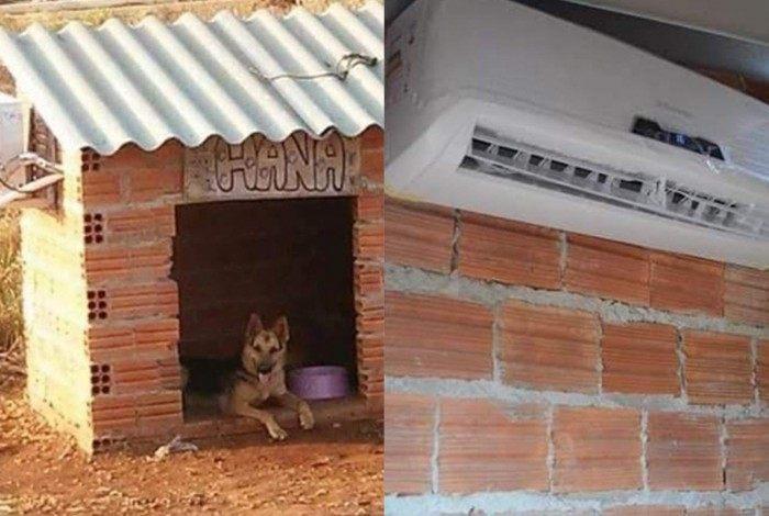 Casinha de cachorro com ar condicionado viraliza nas redes sociais