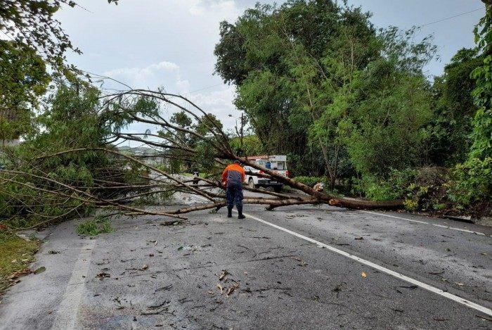 Árvore caiu no quilômetro 33, altura de Cachoeiras de Macacu