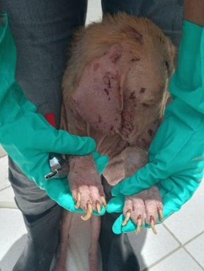 Cachorro em estado de abandono no canil municipal de Cabo Frio