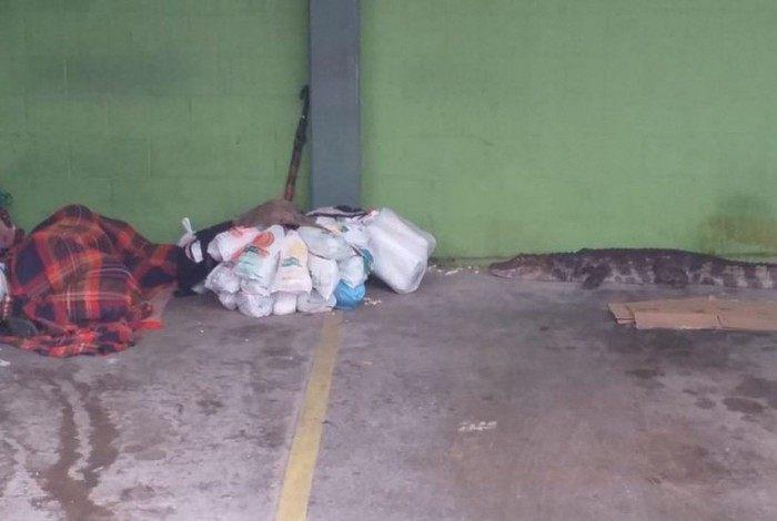 Jacaré chegou perto de morador de rua que dormia no estacionamento de um supermercado em Cananéia (SP)