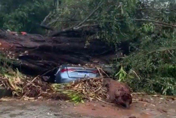 Árvore caiu sobre carros no Hortomercado Municipal, em Itaipava