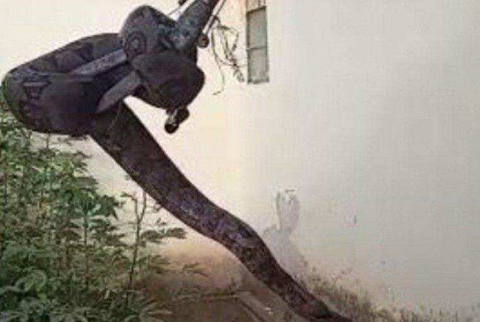A serpente foi encontrada no telhado de uma casa em Araxá